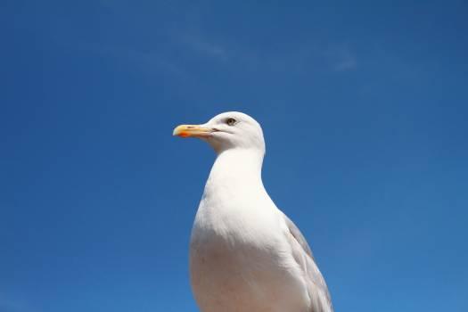 seagull bird animals #24723