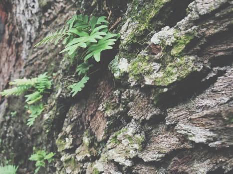 trees bark leaves Free Photo