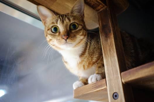 Cat Feline Kitten #247354