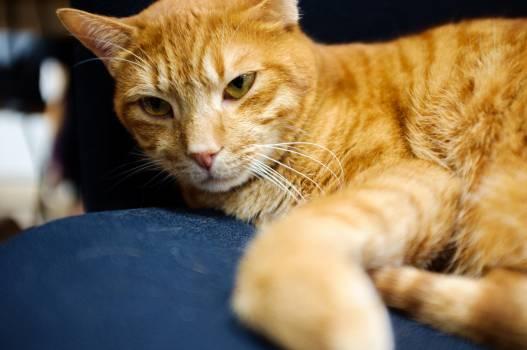 Cat Feline Kitten #247356