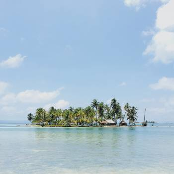 palm trees island tropical Free Photo