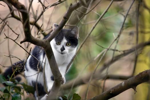 Kitten Cat Fur #247799