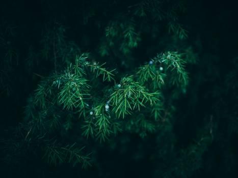 green bush plants #24803