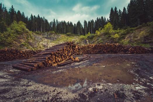 wood logs lumber #24812