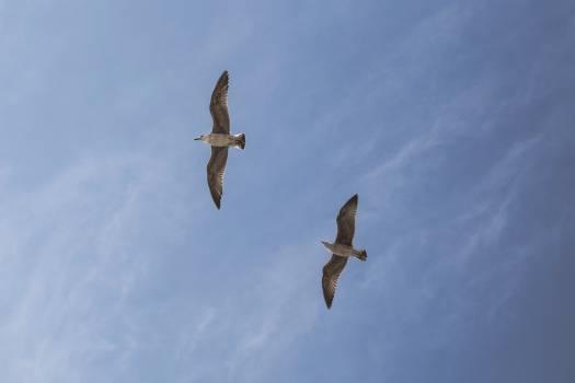 blue sky birds #24821