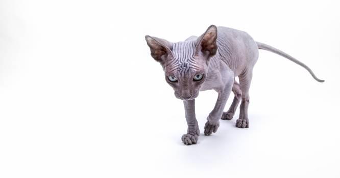 Baby Animal Cat Free Photo