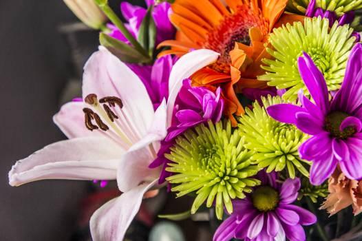 bouquet flowers colors Free Photo