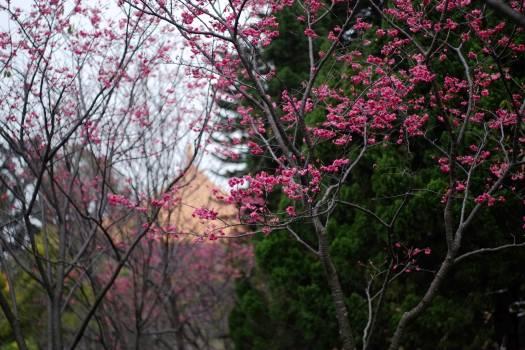 Maple Tree Autumn #248620