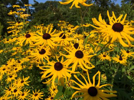 yellow flowers garden #24873