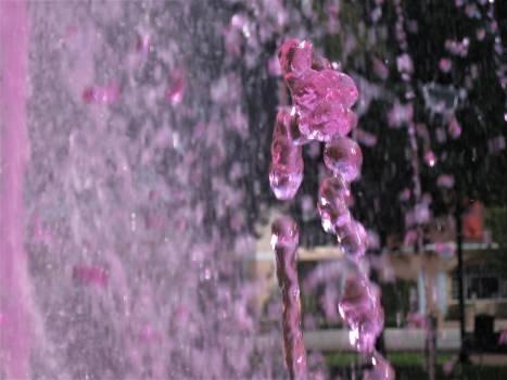 Flower Orchid Purple Free Photo