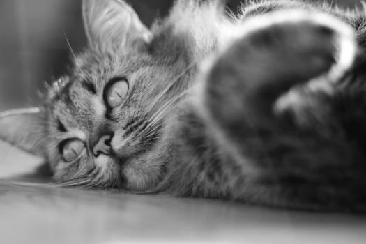 Cat Feline Animal #248809