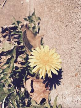 Flower Plant Summer #248863