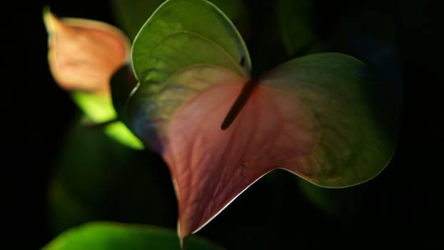 Leaf Plant Stalk Free Photo