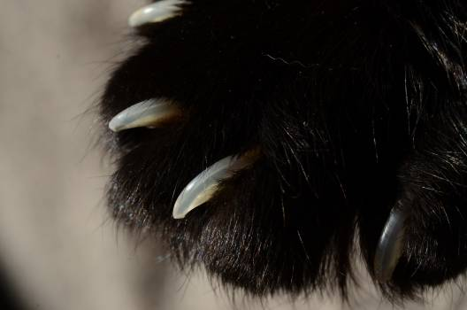 Porcupine Rodent Mammal #249036
