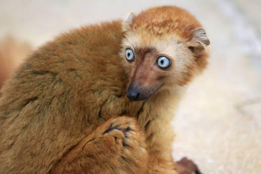 Fox Mammal Wildlife #249110