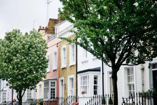 trees houses neighbourhood Free Photo