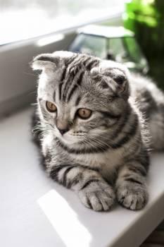 Cat Feline Domestic cat #249253