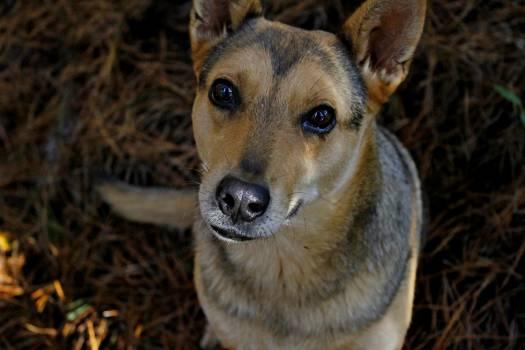 Dog Canine Pet #249484