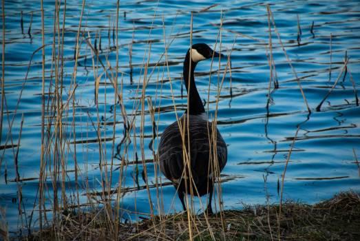 Wading bird Bird Aquatic bird #249548