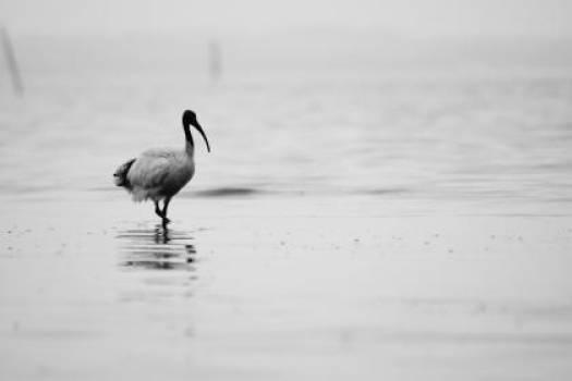 bird animals water #24954