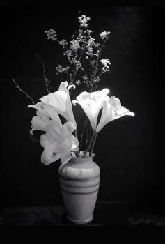 Man White Vase Free Photo