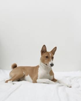 Dog Domestic animal Canine Free Photo