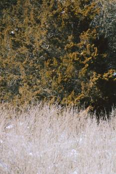 Tree Landscape Oak Free Photo