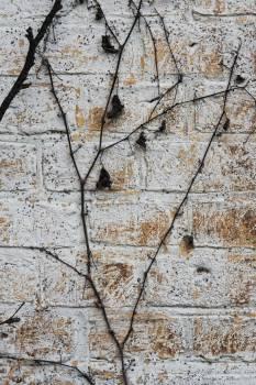 bricks wall vines #25050