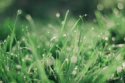 Grass Plant Dew Free Photo