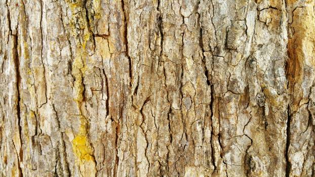 Bark Tree Wood Free Photo