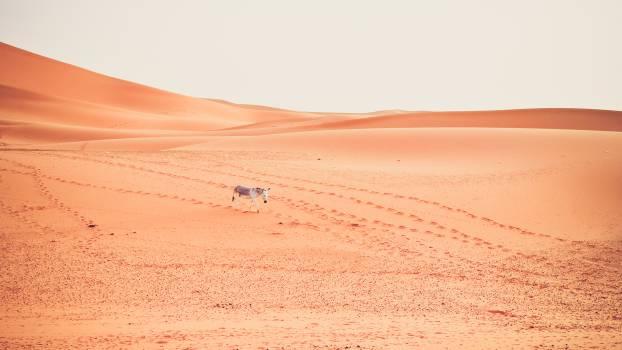 Dune Sand Desert #250735