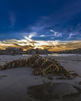 Beach Sea Ocean #250866