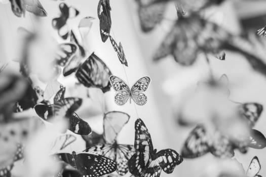 butterfly butterflies wings #25118