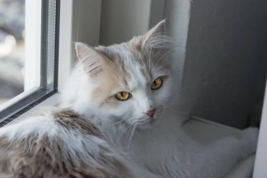 Cat Feline Kitten #251540