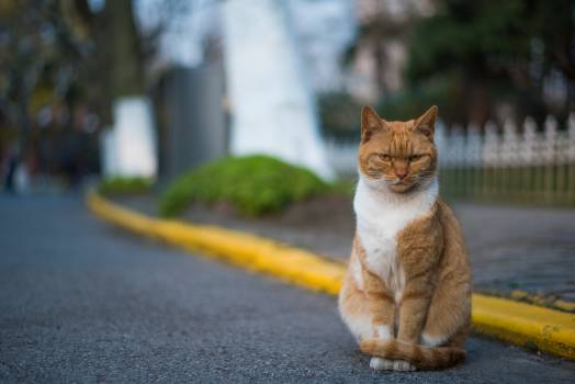 Cat Feline Animal #251627