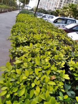 Plant Leaf Broccoli #251978