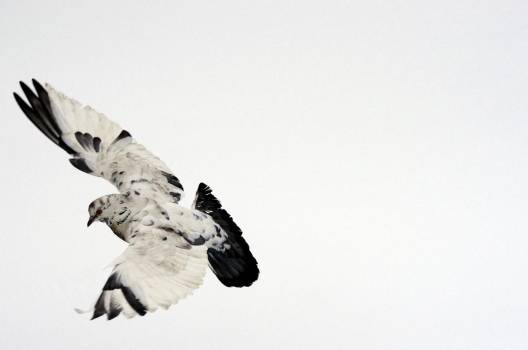 Astronaut Sport Skate Free Photo