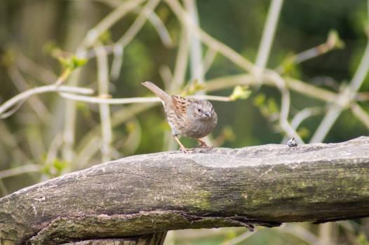Bird Hummingbird Bulbul Free Photo