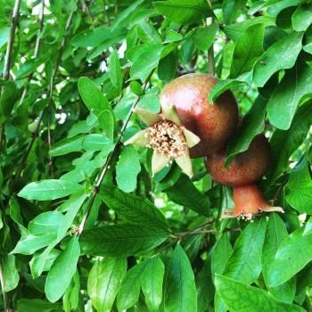 Fruit Acorn Hip Free Photo