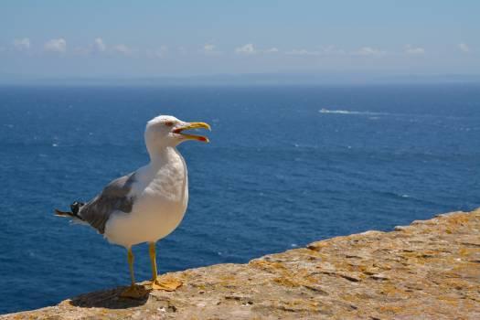 Albatross Bird Aquatic bird #25233