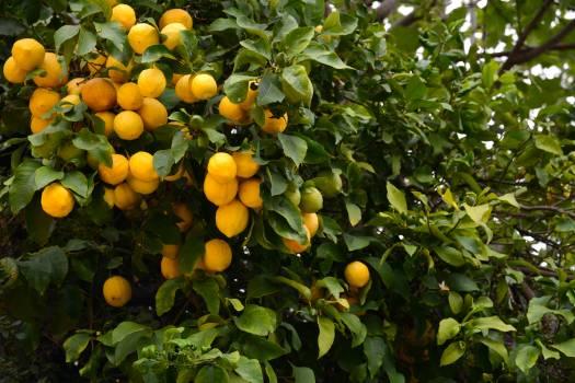 Orange Fruit Citrus Free Photo
