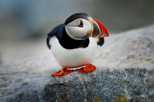 Duck Aquatic bird Bird #252622