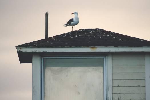 White stork Stork Bird #25268