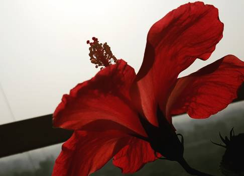 Red Flower Love #252927