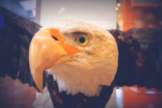 Bird Hornbill Macaw #25299