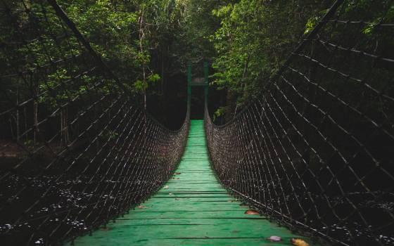 Spider web Web Trap Free Photo