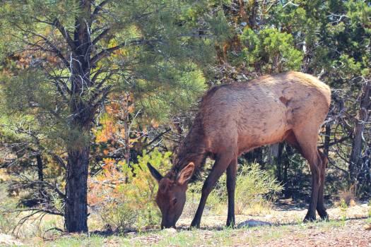 Wild boar Swine Ungulate #25343