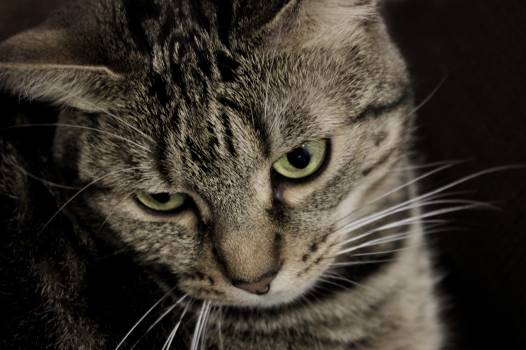 Cat Feline Domestic cat #253570