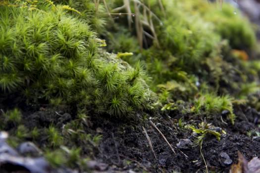 Plant Leaf Fern #253640