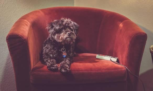 Terrier Dog Hunting dog #253679